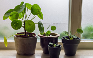 呵護室內植物度過寒冬的5大技巧