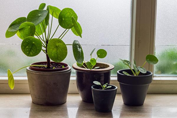 呵护室内植物度过寒冬的5大技巧