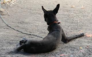 台南女童遭黑狗追逐猝死 飼主被判刑6個月定讞
