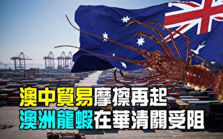 【澳洲新闻热点】龙虾出口或为澳中贸易最新受创目标