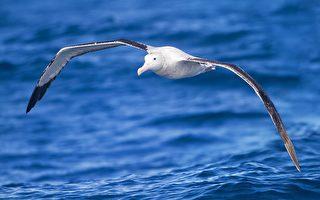 翼展超六米 恐龍滅絕後驚現巨鳥統治南極洲