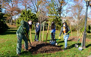 獲TD銀行捐2萬元 皇后區植物園與高中生合作種樹