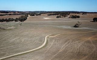 政府擬將北京告上世貿 澳洲穀物種植者支持