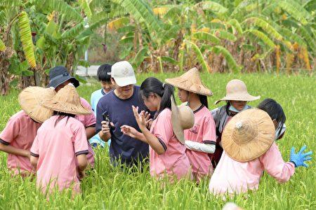 漢口國中的楊士霆老師跟著學生下到水稻田裡,觀察在水田中活動的生物。