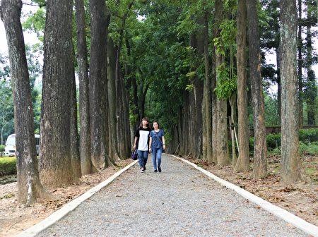 新威森林公园内最著名的桃花心木林步道。