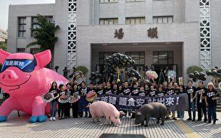台周日反莱猪游行 5米巨型充气粉红猪首亮相