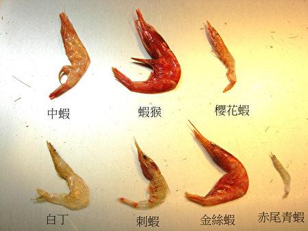 赤尾青虾的虾身长是樱花虾三分之一,颜色黄白色。