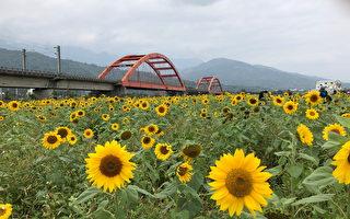 縱谷畫布花海迎賓 農糧署備40公噸種子