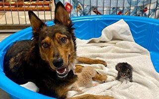 患癌狗痛失幼崽好悲伤 收养孤儿猫 重拾笑容