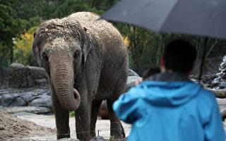 动物权力组织声讨奥克兰动物园遣返大象