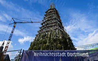 最高圣诞树搭建中 德国多特蒙德市忍痛拆除