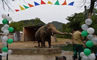 """动物界首次 """"世界最孤独大象""""飞抵柬埔寨"""