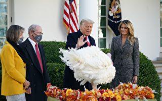 組圖:川普與夫人出席感恩節赦免火雞儀式