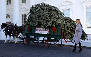 """组图:马车运""""冠军""""圣诞树抵白宫 第一夫人迎接"""