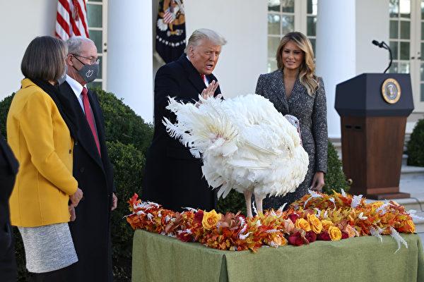 【重播】川普和夫人举行感恩节火鸡赦免仪式