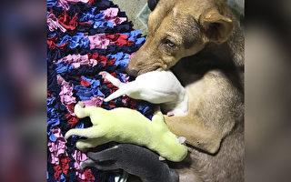 緊隨意大利 菲律賓又降生一隻罕見綠色狗