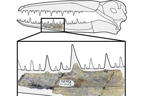南極發現史前巨鳥化石 頭骨約六十厘米長