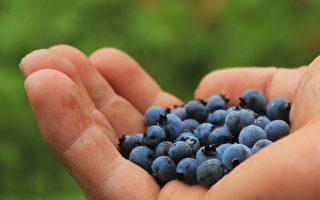 维州蔬果采收工作极缺工人 不到1%失业者感兴趣