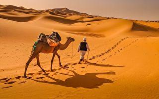 新型降溫技術靈感來自駱駝