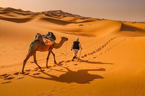 新型降温技术灵感来自骆驼