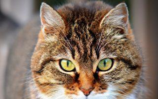 在教堂住12年 英國流浪貓過世獲紀念儀式