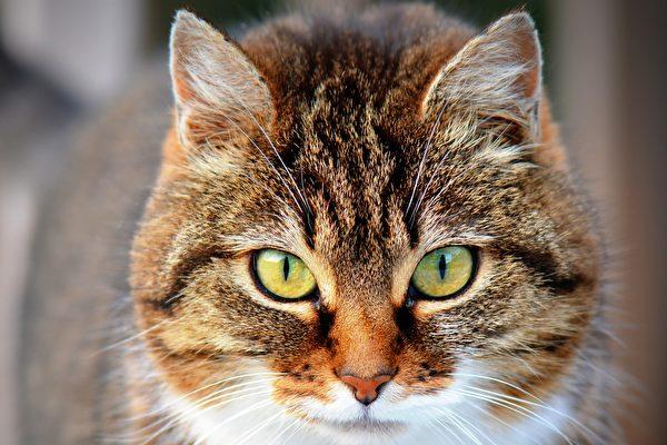 在教堂住12年 英国流浪猫过世获纪念仪式