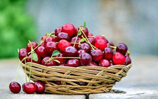 蓝莓樱桃应有尽有 亚拉河谷采摘季开始