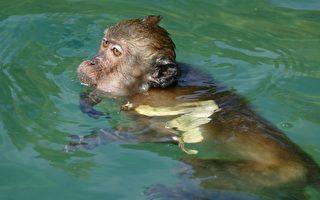 猴子在河中快溺毙 巴西善心男子出手搭救