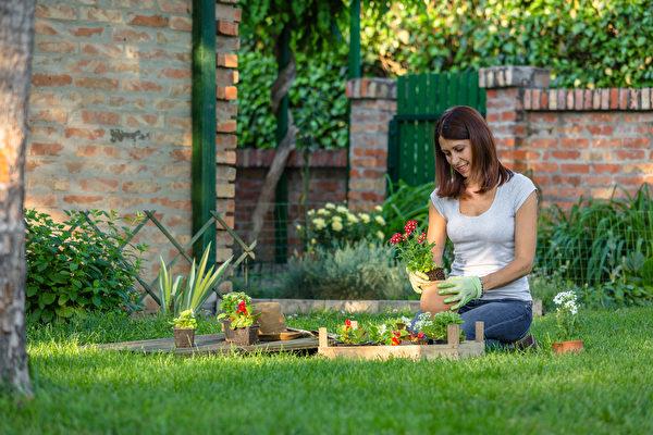 喜欢园艺 适合季节性过敏的人栽种的植物