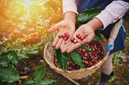 shutterstock,berry,漿果