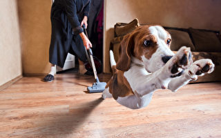 选择适合的地板材质 猫狗居家活动好放松