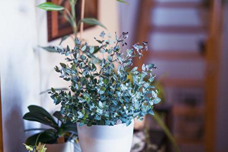 植物, 薰衣草, 療癒, 白鶴芋, 室內植物, 尤加利樹