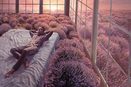 植物, 薰衣草, 療癒