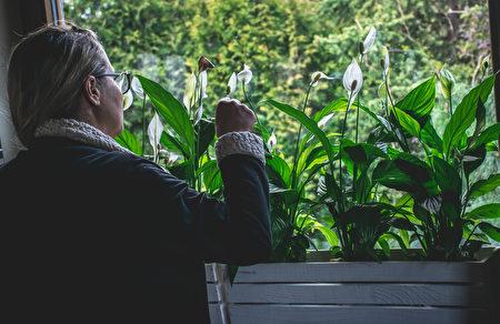 植物, 薰衣草, 療癒, 白鶴芋