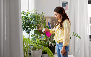 植物也有個性 5種療癒身心的室內植物