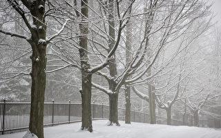 大多區經歷首場冬季暴雪 最高20厘米
