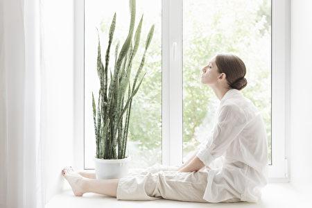 植物, 薰衣草, 蘆薈, 室內植物, 虎尾蘭