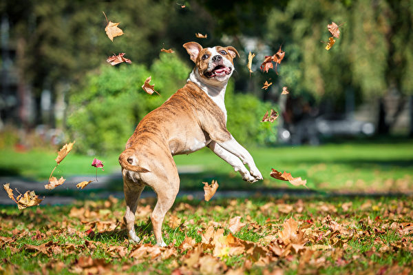 dog run,shutterstock