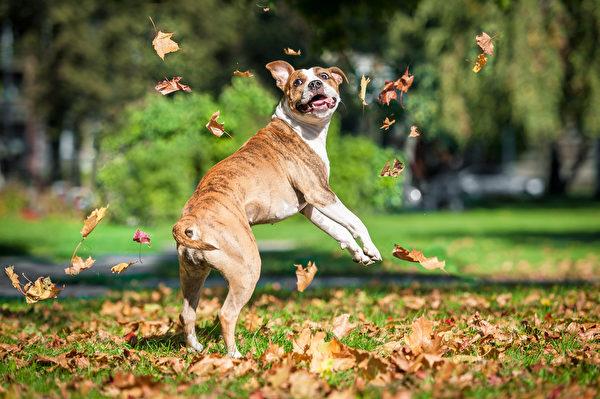 dog run,shutterstock