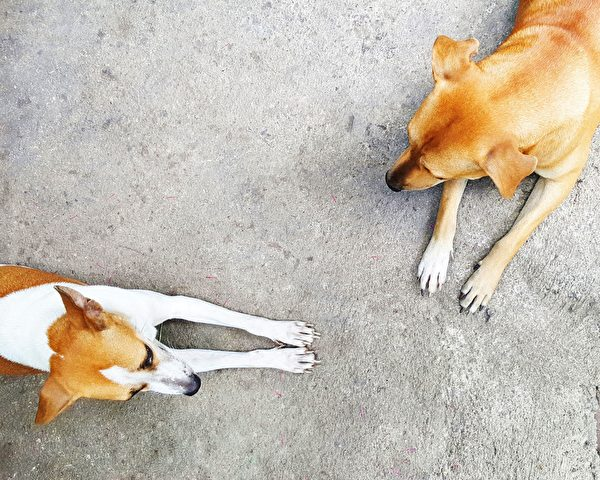 地板, 宠物