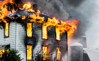 大火中救4人 俄罗斯怀孕母狗自己却被烧伤
