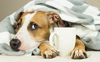 """你的狗患有""""季节性情感障碍""""吗?"""