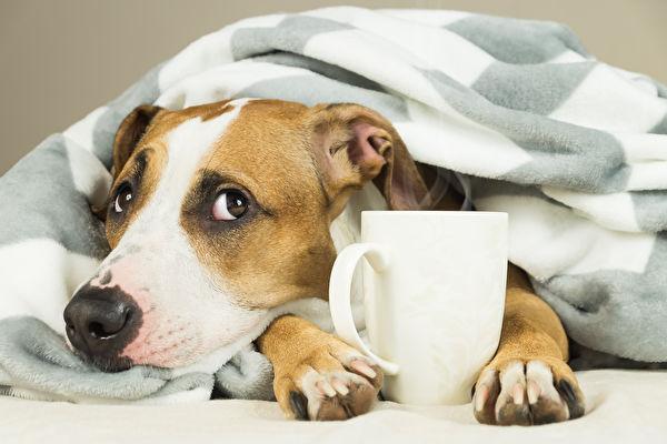 家有爱犬 为狗狗准备元气防癌餐3要点