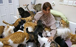 阿曼女子在家养近500只猫狗 月花8000美元