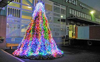 2.5萬回收棒球  裝置「希望之樹」