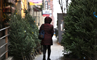 瘟疫流行 纽约街头圣诞树摊主少见魁北克人