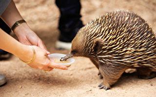 维州政府拨款2000万 资助儿童免费参观动物园