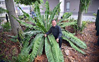 为保育珍稀濒危蕨类尽心 清华成立百蕨园