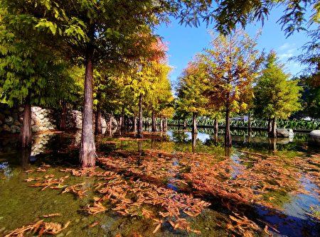 臺中后里泰安國小旁的落羽松秘境,欣賞綠紅相間的樹木映照水面的美景,彷彿置身夢幻國度。
