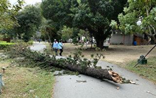 东北季风强劲 南市十起树倒事件